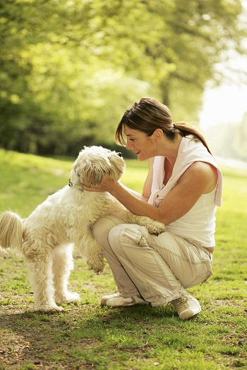 promenade-avec-un-chien